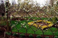 River Road Farms. Belgian Fence in Spring