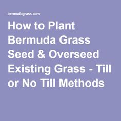 How to Plant Bermuda Grass Seed & Overseed Existing Grass - Till or No Till Methods Patio And Garden, Seeds, Lawn Care Business, Outdoor Gardens, Overseeding, Lawn Sprinklers, Seeding Lawn, Bermuda Grass, Garden Care