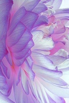 purple flower (photo for study)