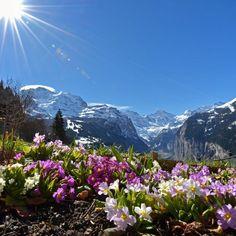 Wengen Switzerland - spring is coming. By Rolf Wegmueller