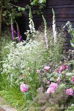 Cottage garden with foxgloves, roses and cow parsley.