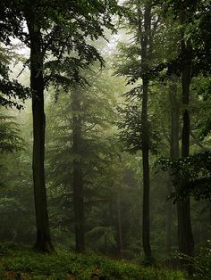 High Forest... in the rain by Joanna #theforest