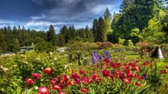 Preview wallpaper flowers, garden, green, sky, clouds, ease, lamp, brightly, flora 1920x1080