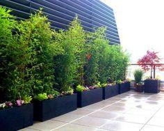 idée déco avec des plantes de bambou