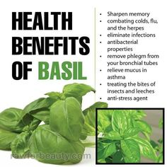 Diet Food health benefits of basil How to lose weight fast ? Basil Health Benefits, Ginger Benefits, Water Benefits, Home Remedies, Natural Remedies, Herbal Remedies, Ginger Water, Thing 1, Anti Stress