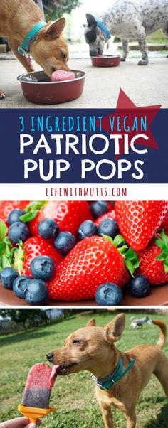 Red and Blue Patriotic Pup Pops recipe made with strawberries, blueberries and coconut milk. An easy DIY summer dog treat that's dairy free and vegan! Perfect for of July and Memorial Day BBQs! Vegan Dog Food, Food Dog, Puppy Food, Dog Treat Recipes, Dog Food Recipes, Summer Dog Treats, Lps Pets, Homemade Dog Treats, Doggie Treats