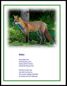 Science Art, Science And Nature, Forest Animals, Animal Pictures, Preschool, Fox, Woodland Creatures, Pet Pictures, Kid Garden