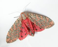 Moth with pink wings #moth
