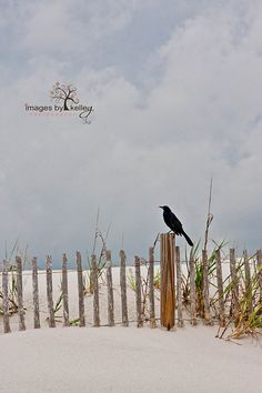 Photo by Kelley Nelson on Pawley's Island SC