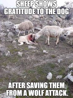ideas funny cute animals sad for 2019 Funny Animal Memes, Cute Funny Animals, Dog Memes, Funny Memes, Funny Facts, Funny Babies, Funny Dogs, Cute Dogs, Funny Sleep