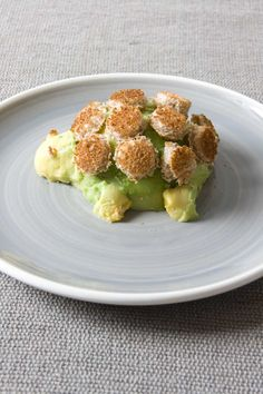 Avocado tortoise