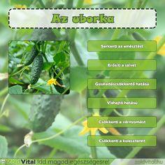 Az uborka jótékony hatásai #uborka