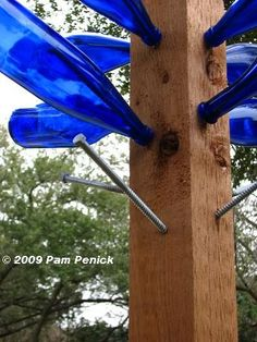 Digging » Bottle tree blooms again: How to make a bottle tree