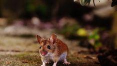 Így szabaduljunk meg a levéltetvektől természetes úton! | Hobbikert Magazin Animals, Animais, Animales, Animaux, Animal, Dieren