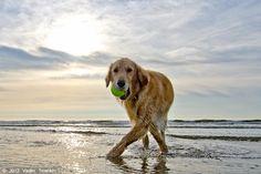 Summer?  Check.  Galveston Island?  Check.  Two words:  Dog. Heaven.