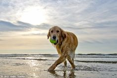 Summer?  Check.  Galveston Island?  Check.  Two words:  Dog. Heaven.