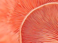 Marvelling the Mushroom by Marilyn Cornwell