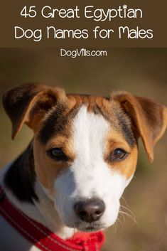 If you're searching for some of the most spectacular Egyptian dog names, we've got you covered! Check out 45 for male pups! Husky Names Male, Egyptian Names, What Dogs, Puppy Names, Dog Rules, Dog Signs, Shepherd Puppies, Family Dogs, Dog Owners
