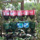 Jardim garrafa erva - um projeto de reciclagem.