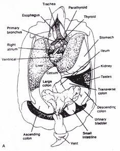 Label a Sea Turtle! {Body Parts Diagram}   Sea turtles and Turtle