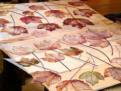 How to preserve fall leaves with Modge Podge (links to the tutorial from this page).  From:  Fall Leaves:Mods Podge: Food Coloring by gingerbread_snowflakes, via Flickr