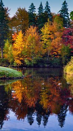 Fall Reflections / My Favorite Season