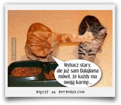 Komiksy, Zwierzęta potworek.com Lol, Humor, Memes, Cats, Funny, Quotes, Animales, Quotations, Gatos