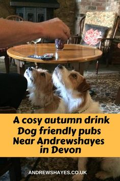 Local Pubs, Pubs And Restaurants, Dog Friendly Holidays, Best Pubs, Great Walks, Pet Dogs, Pets, Fall Drinks, Sunday Roast