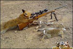 Animals with guns | Animals with Guns - Cat Sniper, Monkey with a gun, Squirrel Machine Gu ...
