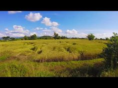 Travel Northern Thailand In Sukhothai Province , Visit Ban Na Ton Chan Village And Golden Rice Fields In Harvest Season November . Northern Thailand, Harvest Season, Thailand Travel, Fields, Road Trip, Mountains, Outdoor, Outdoors, Road Trips