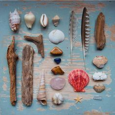 Seashore treasure haul via Poppytalk on Anja Mulder Dream Catchers, Nature Collection, Altar, Sea Shells, Creations, Beach House, Crafty, How To Make, Collections