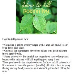 DIY - How to Kill Poison Ivy
