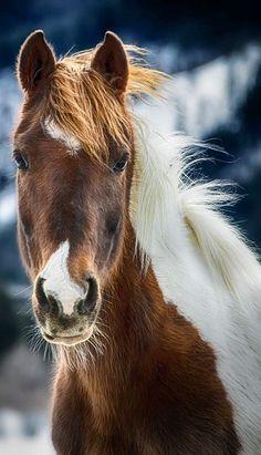 LoVe Of Horses - #LadyLuxuryDesigns