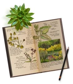 Website home Page Beginning a Nature Journal Learn the Secrets of Field Sketching and Create a Beautiful Illustrated Nature Journal Imagine Using art to connect with nature Imagine learning ways to fine tune your listening and observational skills so that Diy Nature, Nature Study, Science Nature, Garden Journal, Nature Journal, Botanical Drawings, Botanical Art, Journal Vintage, Nature Sketch