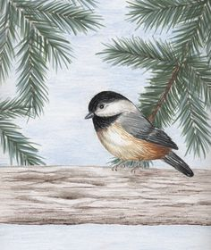 """My Little Chickadee"" by Peggy Markham. I love Black Capped Chickadees. They're so cute! I created this one using Zig Brush pens for the evergreen and colored pencil for the rest."