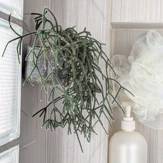 How about a plant in your shower?