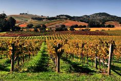"""Napa valley and wineyards, CA.  Been there twice , first time inspired by """"Sideways"""" .   Love the wine tasting"""