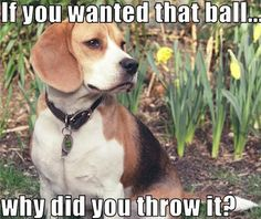 Logical Dog