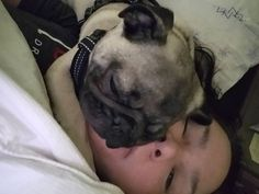 School and work is closed. This is how I went back to sleep. Bruce had to sleep on my face. French Bulldog, Sleep, School, Face, Dogs, Animals, Animais, Animales, Animaux