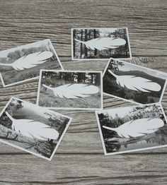 Wilderness Place Cards & Wood Holders – Set of 6 by Wonderful Collective on Scoutmob Shoppe