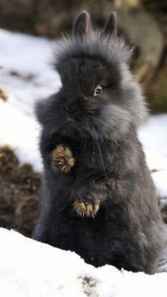 rabbit bunny black funny