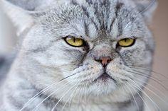 ネコは飼い主をネコと思っている? 動物行動学者が語るネコの感覚 http://natgeo.nikkeibp.co.jp/nng/article/20141215/428394/