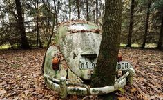 A tree grows through a 50-year-old VW Beetle, supposedly the first car to cross the border after the Berlin Wall fell Vw Bus, Auto Volkswagen, Volkswagen Germany, Abandoned Cars, Abandoned Places, Abandoned Vehicles, Berlin Wall Fall, Rust In Peace, Vw Vintage
