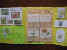 Foto e descrizione del nostro lapbook sulle piante.