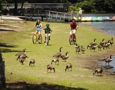 Fun activities for the whole family. Take a a scenic bike ride in Delaware!