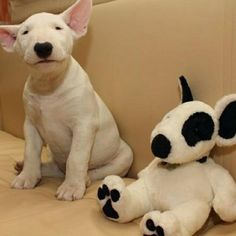 English bull terrier...want! My favorite dog breed is the bull terrier! I need one!!! #bullterrier