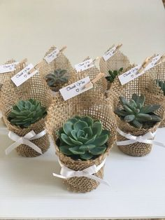 Succulent wedding favors - Succulent favors for weddings, birthdays, christenings, baby showers or any special occasion weddingfavors wedding favors ad succulent Wedding Favors And Gifts, Wedding Shower Favors, Baby Shower Party Favors, Baby Shower Souvenirs, Bridal Gifts, Baby Shower Cakes, Succulent Wedding Favors, Succulent Gifts, Succulant Wedding