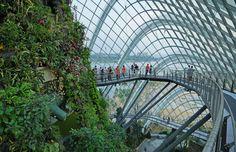 Singapur: Gardens by the Bay & OCBC Skyway - Kombiticket Singapore Garden, Singapore Travel, Marina Bay, Singapore Island, Places To Travel, Places To Go, Madrid, Crop Pictures, Forest Garden