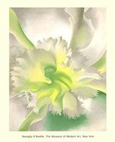"""moma: """" Happy first day of Spring! Admire this early bloomer by Georgia O'Keeffe. [Georgia O'Keeffe. An Orchid. Georgia Okeefe, Wisconsin, Georgia O Keeffe Paintings, Alfred Stieglitz, Wow Art, Arte Floral, Oeuvre D'art, Flower Art, Art Flowers"""