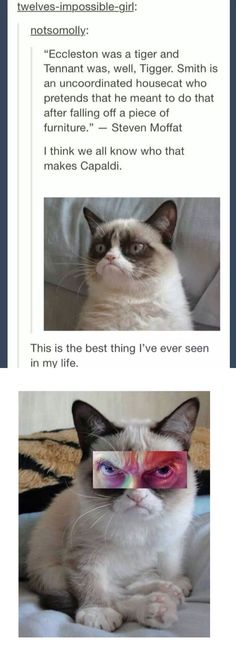 So right. I've been comparing the 12th Doctor to Grumpy Cat since the beginning of the eighth season.